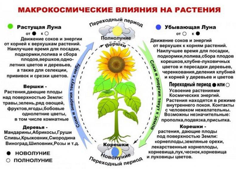 Лунный календарь лен обл